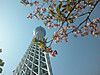 Skytree_with_cherry